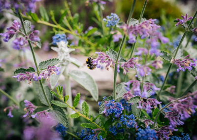 more bees in the garden
