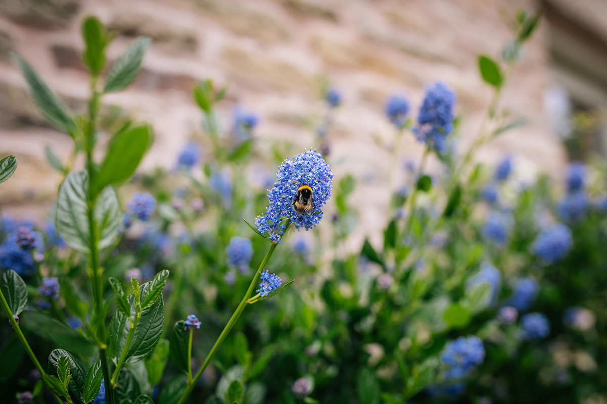 Bees are regular visitors to the garden at Harrop Farm